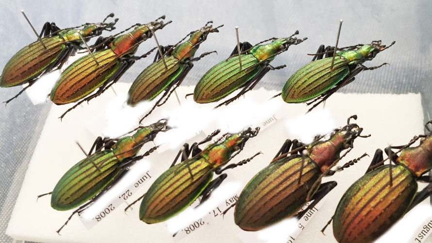 北海道昆虫同好会2018