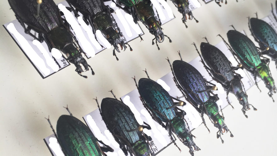 北海道昆虫同好会2019